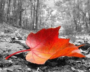 Immagine di Color Splash Photo, App per fare foto su Android, iPhone e iPad
