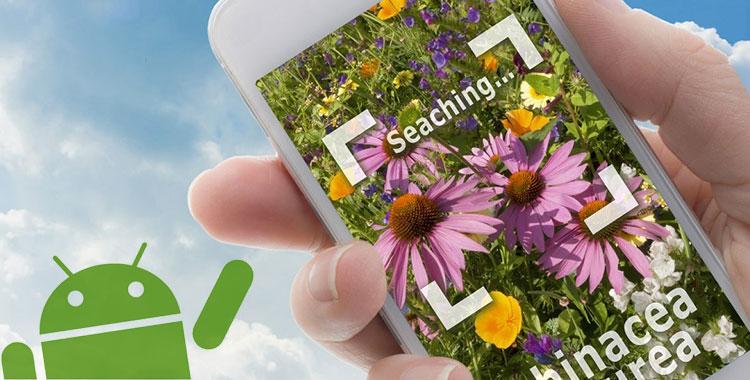 App per il riconoscimento di piante e fiori con Android
